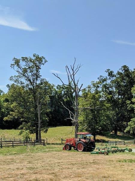 Kubota tractor parked under a snag - wildlife tree